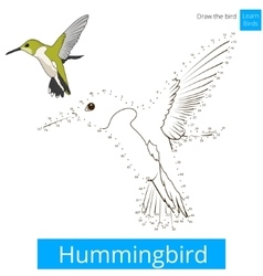 Hummingbird bird learn to draw vector image