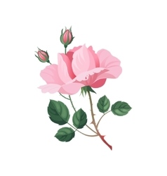 Rose hand drawn realistic vector