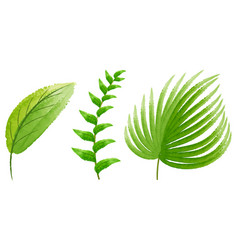 three types of green leaves vector image