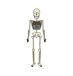 Human skeleton icon image vector
