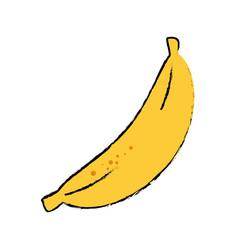banana fruit food vector image