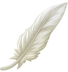 White feather on white background vector image vector image