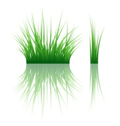Reflected grass pattern vector