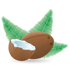 coconut 04 vector image