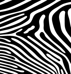 skin of zebra vector image