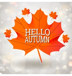 Hello Autumn design with maple leaf vector image