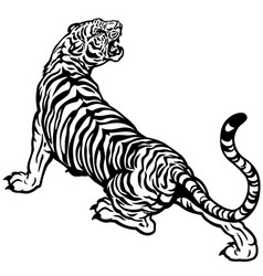angry tiger black white vector image