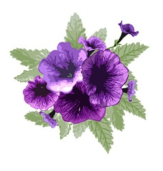 Petunia floral bouquet vector