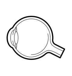 Eyeball anatomy icon vector