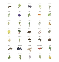 A large set of isolated herbs and spices for vector