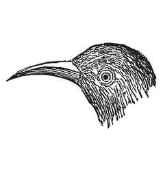 Beak vintage vector