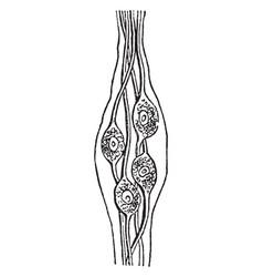 Nerve cells vintage vector