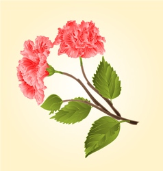 Pink hibiscus stem tropical flower vector image vector image