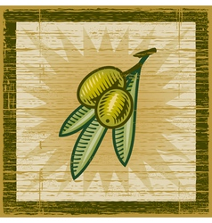 Retro olive branch vector image