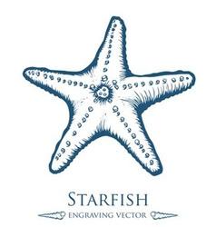 Starfish drawing vector