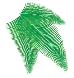 Palm branch vector