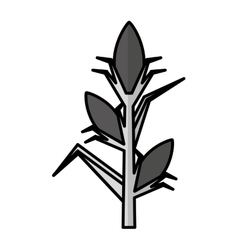 corn plant isolated icon vector image