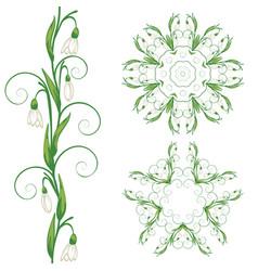 White snowdrop flowers vector