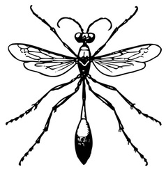 ammophila vector image vector image