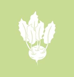 Kohlrabi Vegetable Icon vector image vector image