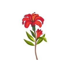 Tiger Lily Hand Drawn Realistic vector image