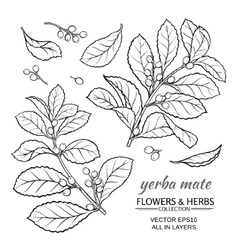 Yerba mate set vector