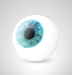Realistic eyeball vector
