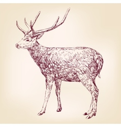 Deer hand drawn llustration realistic sketch vector image