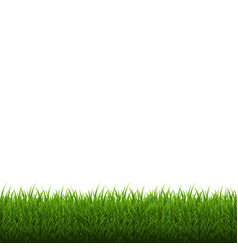 grass border isolated vector image vector image