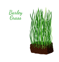 barley grass wheat cartoon flat style vector image vector image