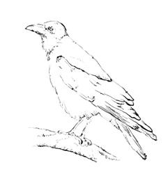 Hand drawn crow vector image vector image