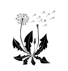 Dandelion summer flowers isolated on white vector
