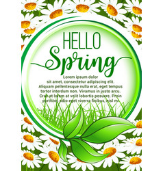 Hello spring floral frame poster with daisy flower vector
