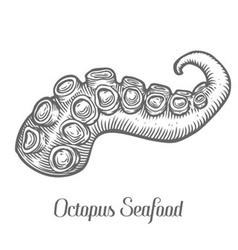 Octopus arm vector