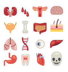 Human internal organs flat icons vector