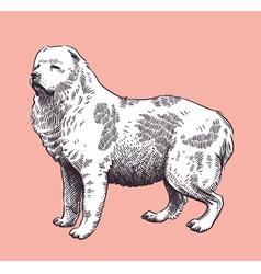 Dog Shepherd Caucasian Mid-Asian vector image vector image