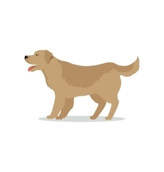 Golden Retriever Dog Isolated on White Labrador vector image vector image