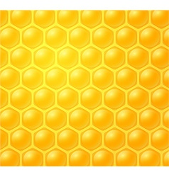 honey making in honeycombs vector image