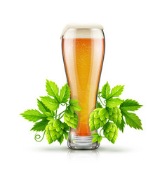 glass of light lager beer vector image