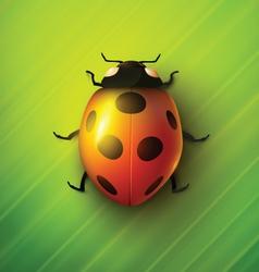 Realistic ladybug vector image
