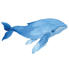 Humpback whale vector