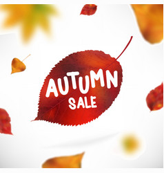 stock sale autumn falling vector image