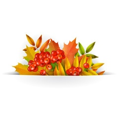 Banner Autumn background or template card vector image