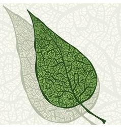 vintage hand drawn leaf vector image