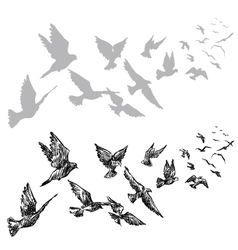 Flying pigeons vector