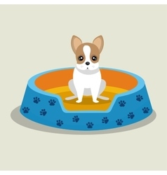 Boston terrier puppy blue bed pet vector