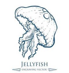 Jellyfish drawing vector