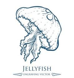 Jellyfish Drawing vector image