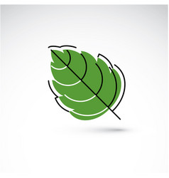 Hand-drawn of simple hazel tree leaf isolated vector
