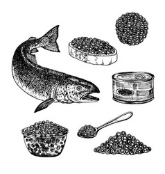 Hand drawn set of red caviar vector